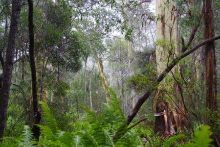 Lake St Clair National Park, Tasmania