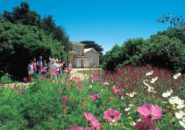 Tas Garden
